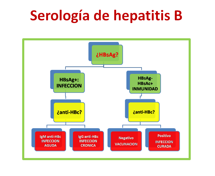 Serología hepatitis B