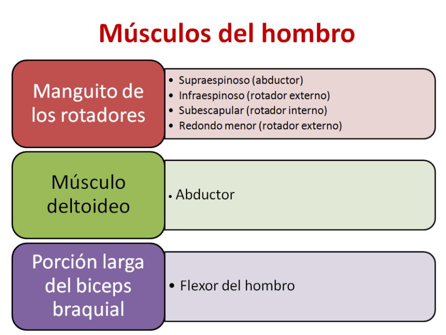hombro-1