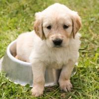 Chuleta: tratamiento infecciones urinarias
