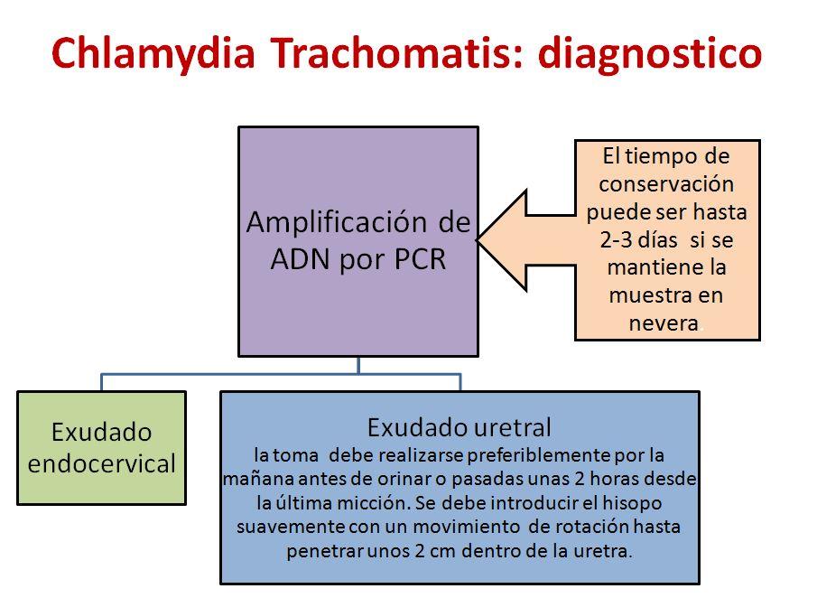 Clamydia-1