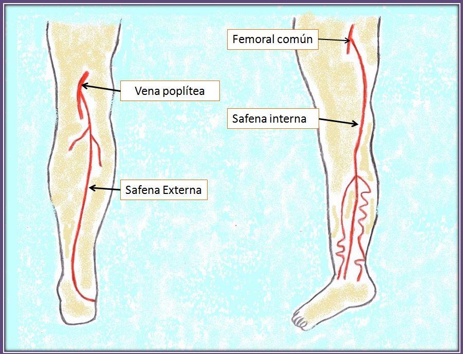 safena anatomia